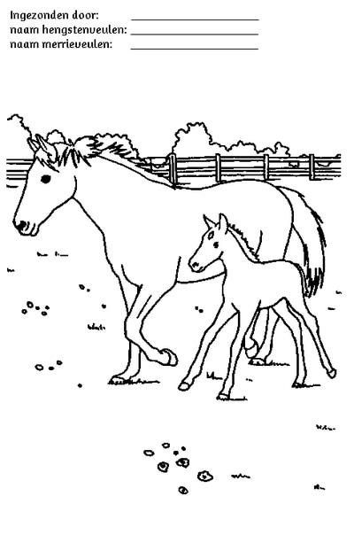 Paard Met Veulen Kleurplaat Kleurplaten Manege Stal T Patersnest